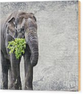 Elephant With A Snack Wood Print