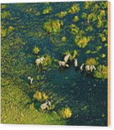 Elephants From Above Wood Print