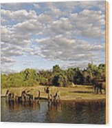Elephants In Chobe Wood Print