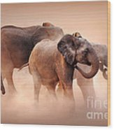 Elephants In Dust Wood Print