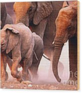 Elephants Stampede Wood Print