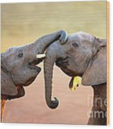 Elephants Touching Each Other Wood Print