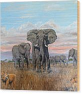 Elephants Warning To The Lions Wood Print