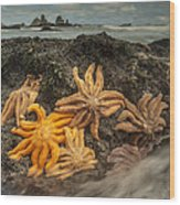 Eleven-armed Sea Stars At Low Tide Wood Print
