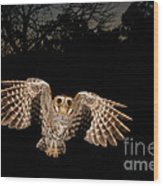 Elf Owl Wood Print by Scott Linstead