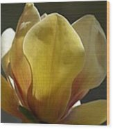 Elizabeth Magnolia Wood Print