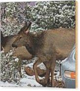 Elk And A Beetle Wood Print