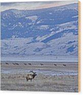 Elk At Dusk Wood Print