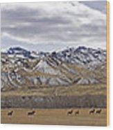 Elk At Sheep Mountain - 21x120 Wood Print