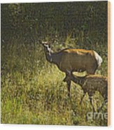 Elk Doe And Fawn-signed  #4465 Wood Print