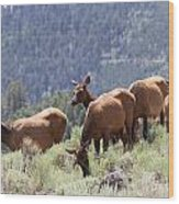 Elk Family - Yellowstone N P Wood Print