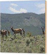 Elk Family Wood Print