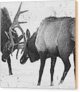 Elk Fighting Black And White Wood Print