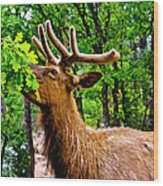 Elk - Grand Canyon National Park Wood Print