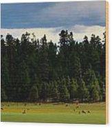 Elk Grazing In The Meadow Wood Print