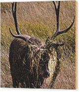 Elk Hairdo Wood Print