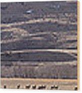 Elk Herd Below Sheep Mnt - 15x110 Wood Print