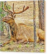 Elk In Kiabab National Forest Arizona Wood Print