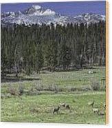 Elk In Meadow Wood Print by Tom Wilbert