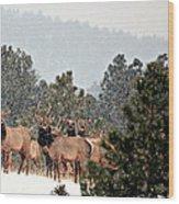Elk In The Snowing Open Wood Print