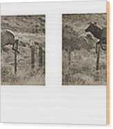 Elk Jumping A Fence Wood Print