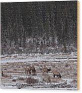 Elk Landscape Wood Print