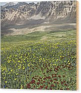 Elk Mountain Wildflowers Wood Print
