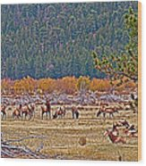 Elk Near Cub Lake Trail In Rocky Mountain National Park-colorado  Wood Print