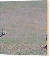 Elk On The Plains 1 Wood Print