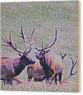 Elk On The Plains 2 Wood Print