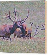 Elk On The Plains 3 Wood Print