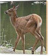 Elk Pictures 74 Wood Print