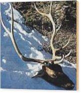 Elk Preservation. Wood Print