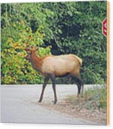 Elk Right Of Way Wood Print