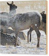 Elk Shaking Off Snow   #0530 Wood Print