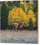 Elks Last Call Wood Print by Rebecca Adams