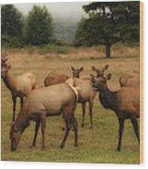 Elks Lodge Wood Print