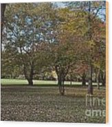 Ellison Park Wood Print