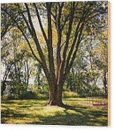 Elm In The Sunshine Wood Print