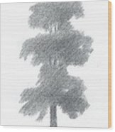 Elm Tree Drawing Number One Wood Print by Alan Daysh