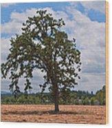 Elm Tree In Hay Field Art Prints Wood Print