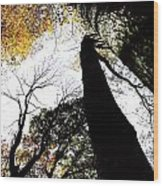 Elora Trees II Wood Print