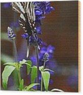 Elusive Zebra Swallowtail Wood Print