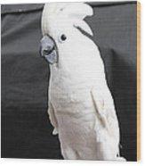 Elvis The Cockatoo Wood Print