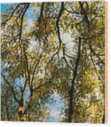 High Links Wood Print