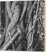 Embracing Rooted Love Wood Print