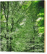 Emerald Clearing Wood Print