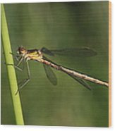 Emerald Damselfly Wood Print