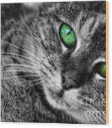 Emerald Eyes Cat  Wood Print