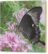 Emerald Peacock Swallowtail Butterfly #5 Wood Print